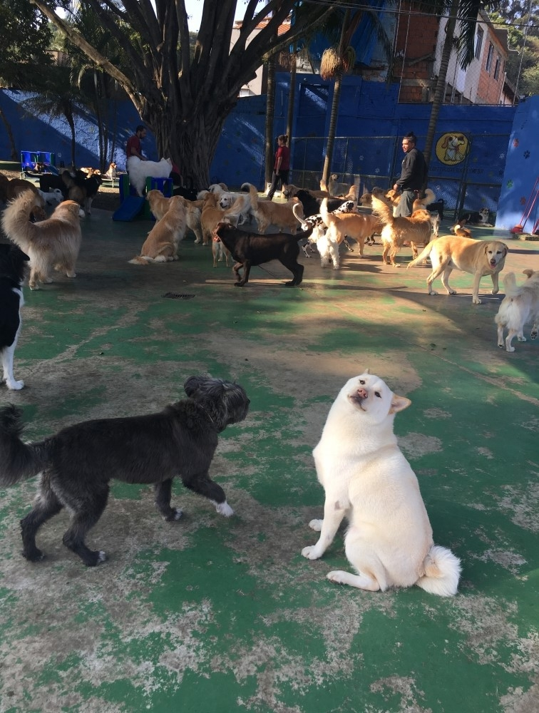 Hotel para Pet na Barra Funda - Hotel para Cachorro Diária