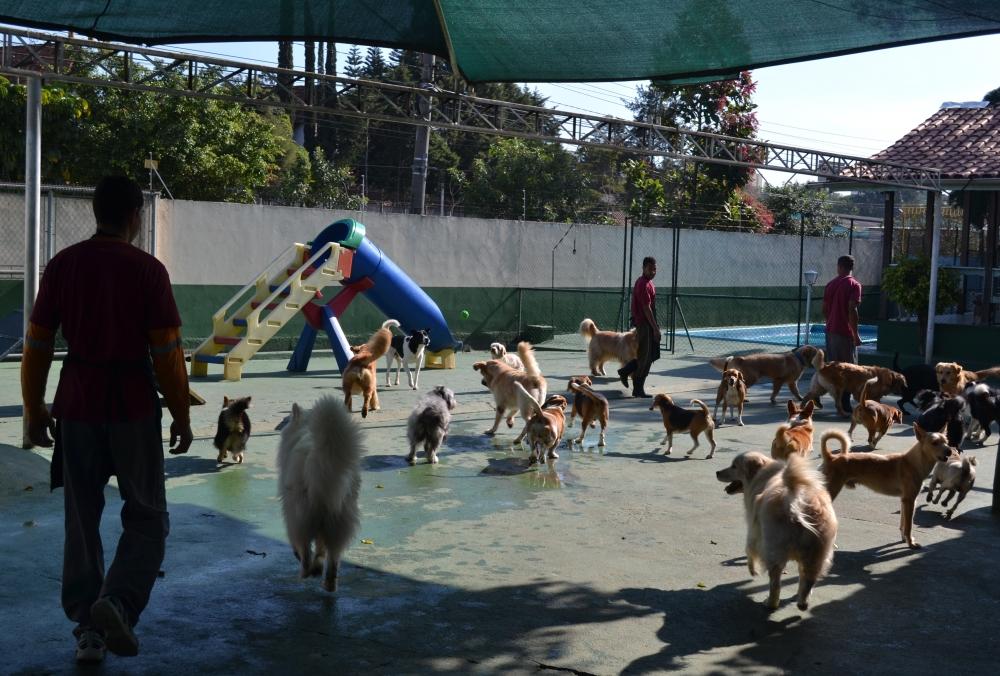 Hotel Pra Cachorro Preço na Vila Formosa - Hotéis para Cachorro