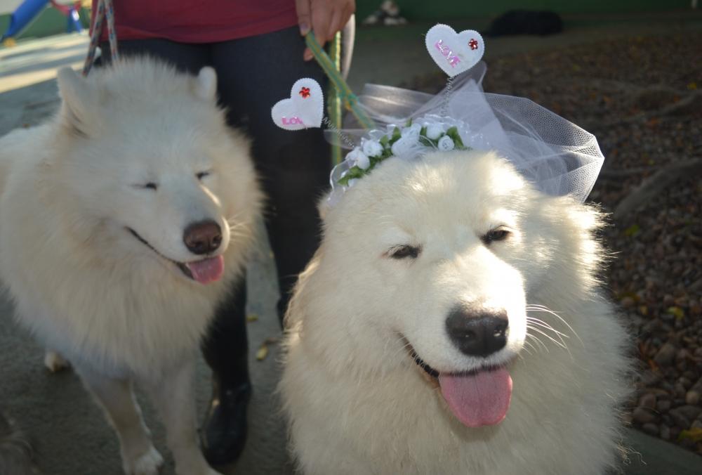 Hotel Pra Cachorro na Barra Funda - Hotel para Pet