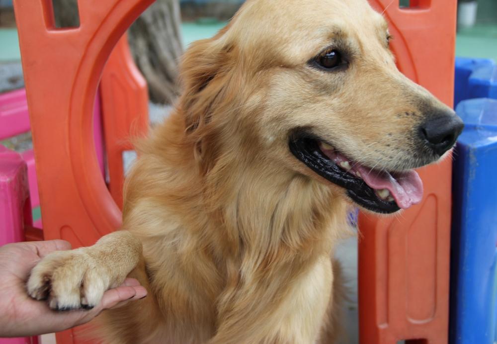 Onde Encontrar Creche de Animais no Tremembé - Creche de Cachorro