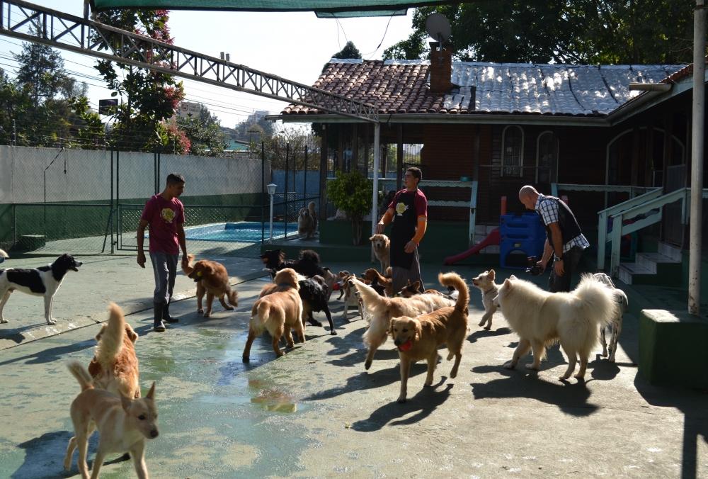 Onde Encontrar Creche de Cachorro no Sacomã - Creche Canina