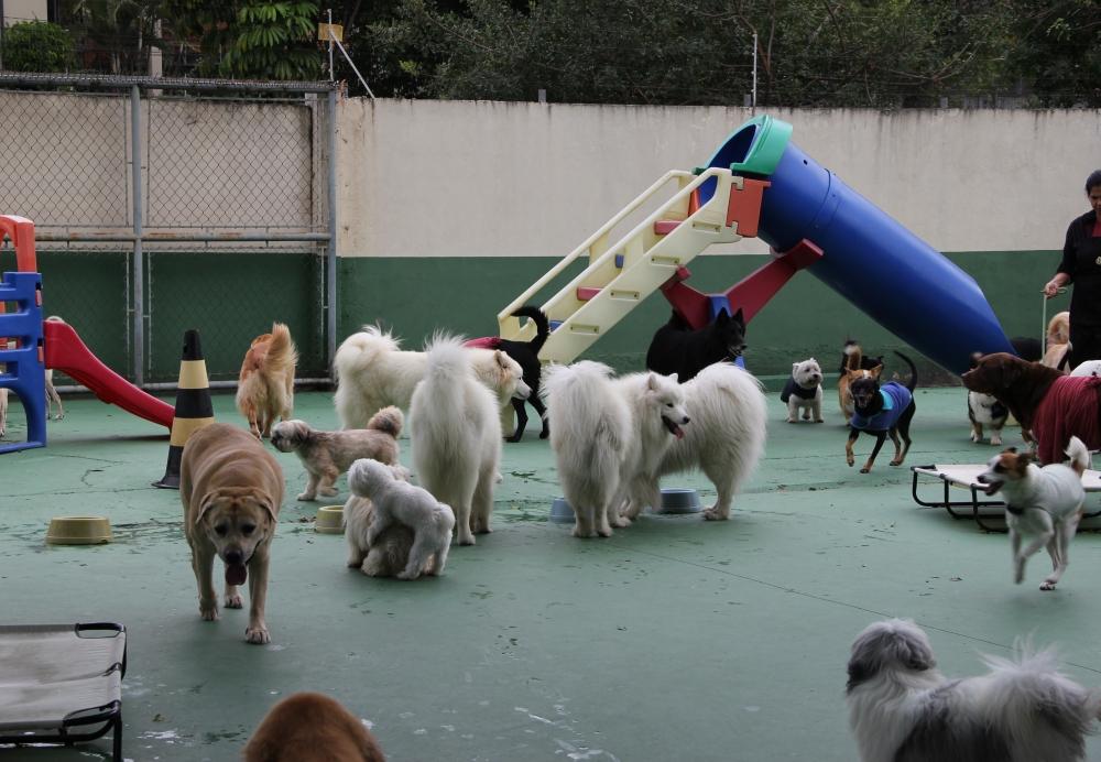 Onde Encontrar Creche de Pets na Sé - Creche para Cães