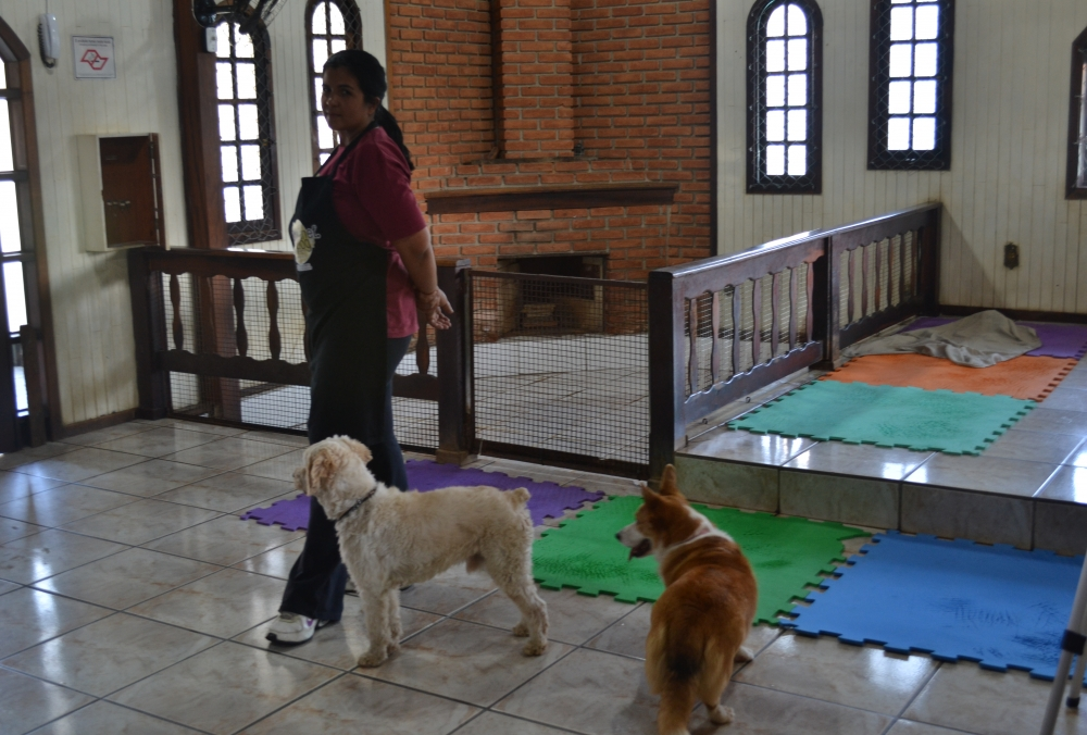 Onde Encontrar Creche para Animais no Jardim São Paulo - Creche Canina