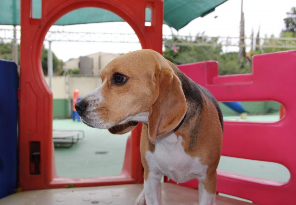 Onde Encontrar Creche para Cachorro no Tremembé - Creche para Animais