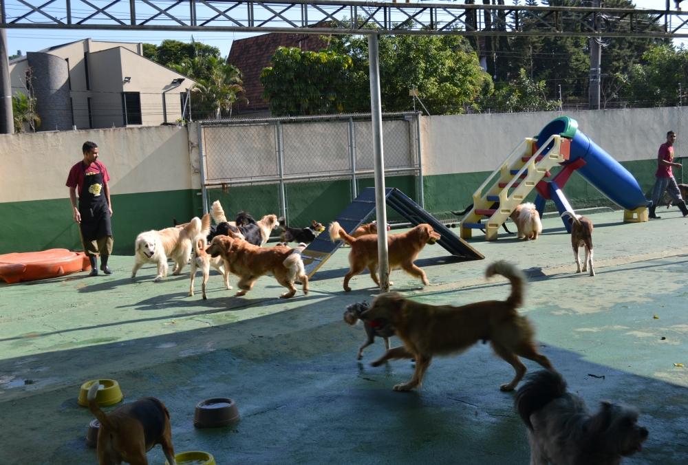 Onde Encontrar Creche para Cães em São Domingos - Creche de Cachorro