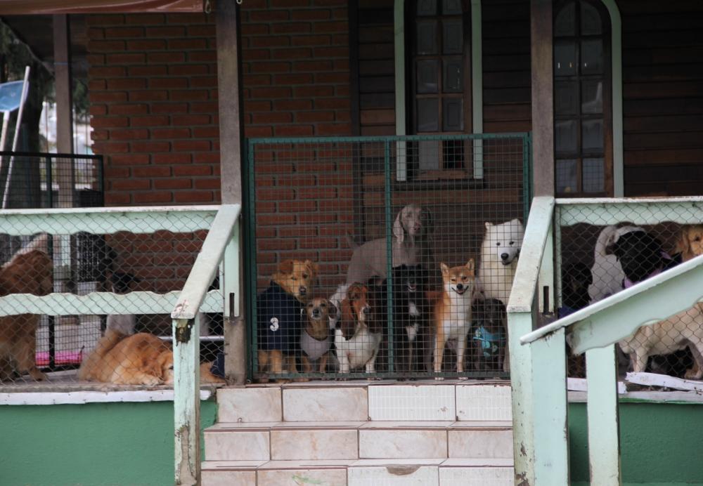 Onde Encontrar Hospedagem de Cães na Vila Curuçá - Hotel de Cães