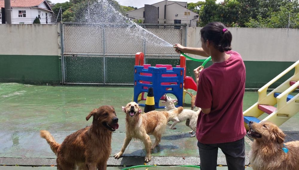 Onde Encontrar Hotéis para Cachorro no Jardim Paulista - Hotel para Cachorro Diária