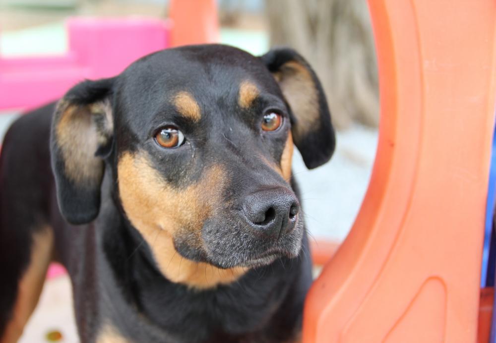 Onde Encontrar Hotel Creche para Cães Monte Carmelo - Creche para Animais
