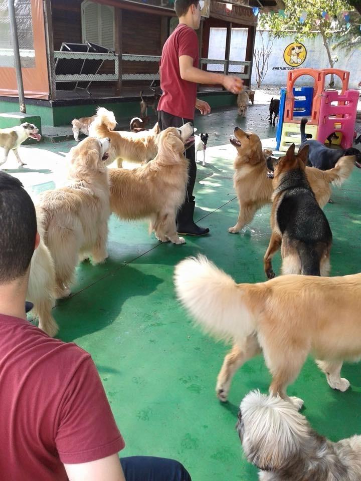 Onde Encontrar Hotel de Cachorro no Centro - Hospedagem de Cachorro
