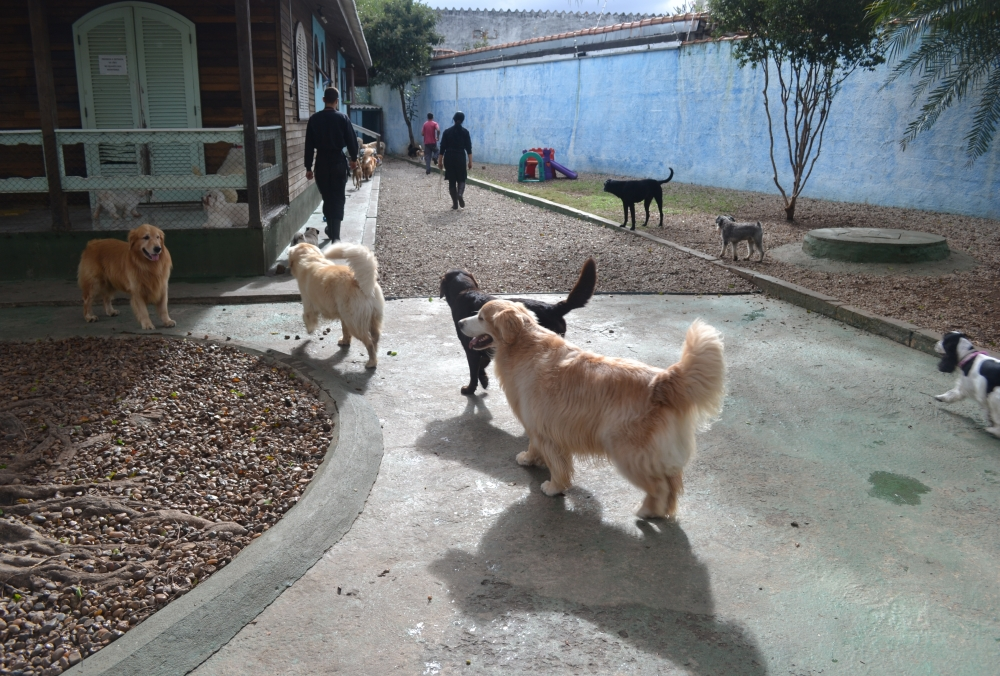 Onde Encontrar Hotel Fazenda para Cachorro Jardim Aracília - Hotel de Cachorro