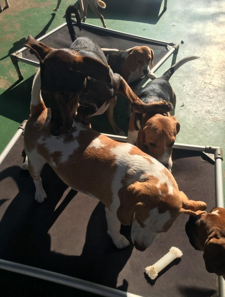 Onde Encontrar Hotel para Cachorro Diária no Pacaembu - Serviços de Hotel para Cachorro