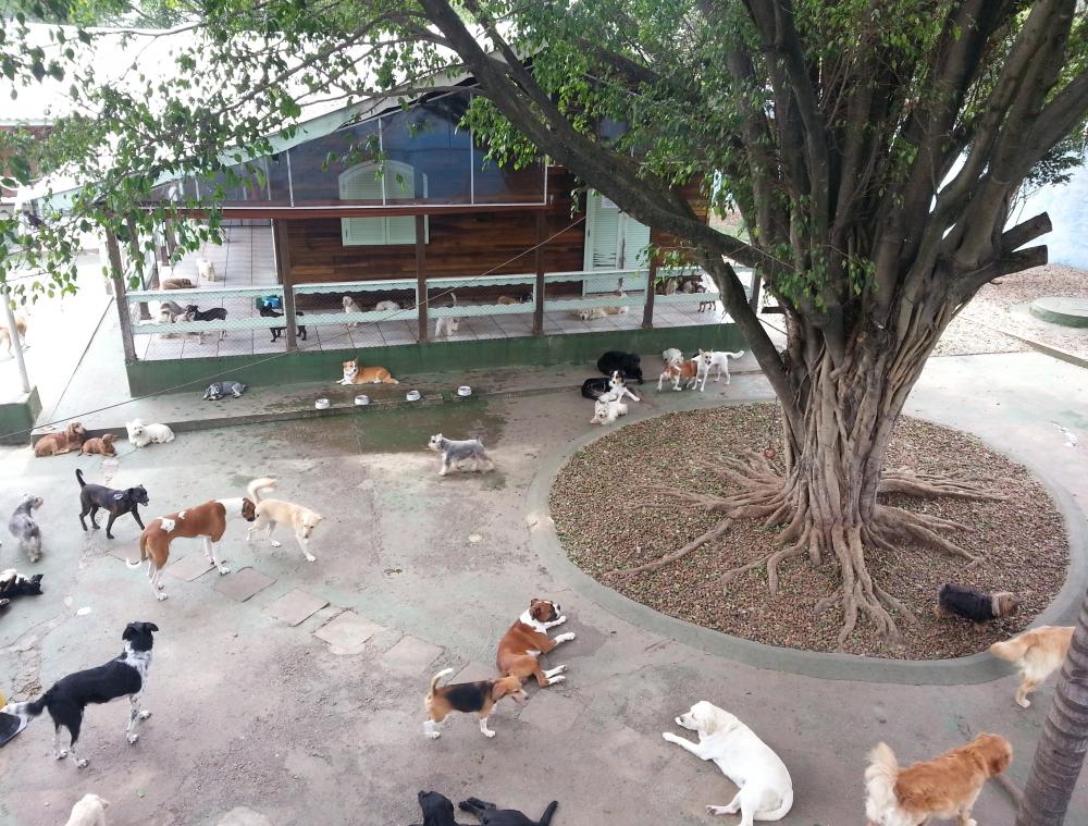 Onde Encontrar Hotel para Cachorro em Sp na Liberdade - Hotel para Cachorro no Brooklin