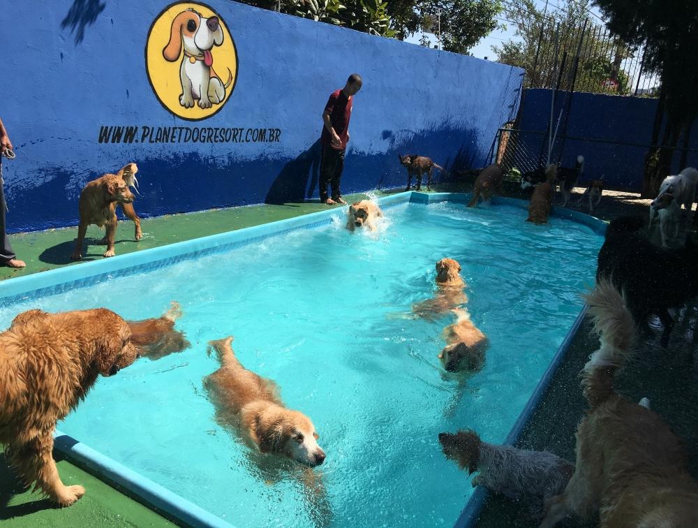 Onde Encontrar Hotel para Cachorro Vila Augusta - Hotel para Cachorro