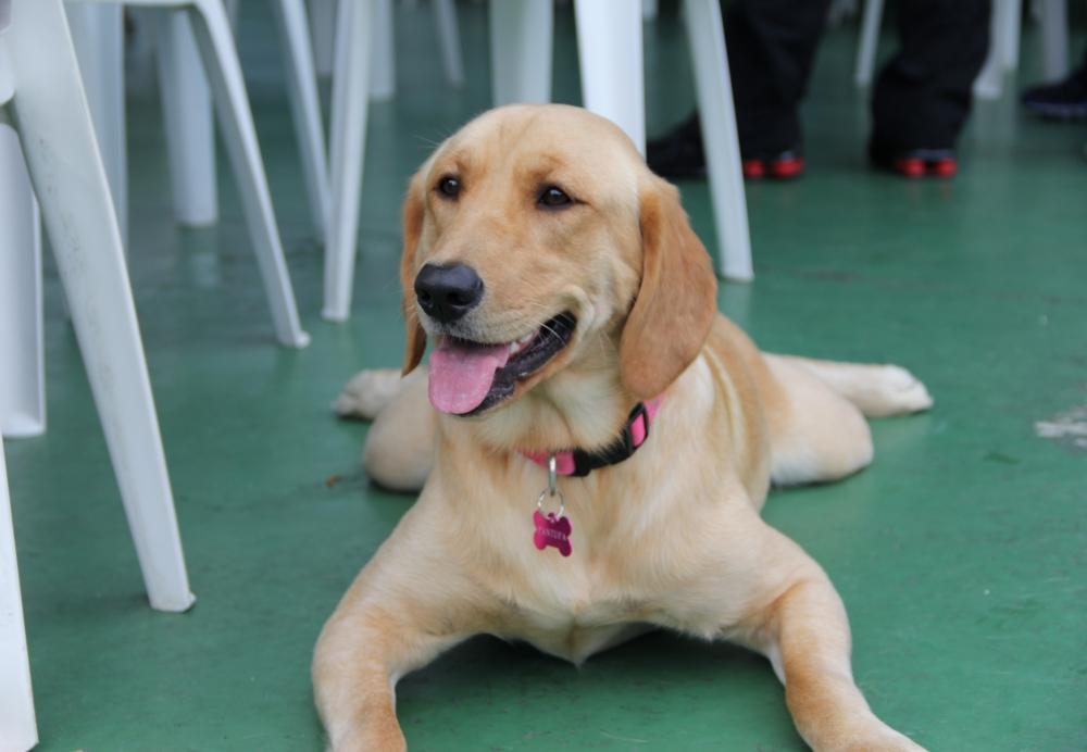 Onde Encontrar Serviços de Hotel para Cachorro em Itaquera - Hotel para Pet