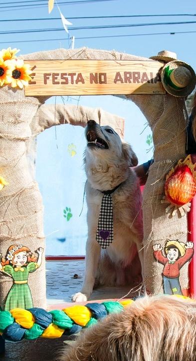 Onde Encontrar Spa Day Care no Sacomã - Dog Resort