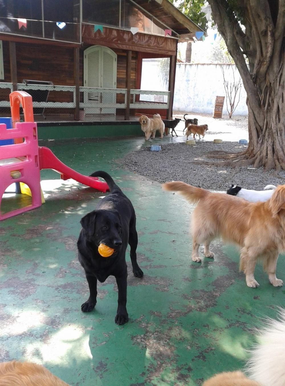 Onde Encontrar Spa para Cachorros na Aclimação - Serviços de Spa Canino