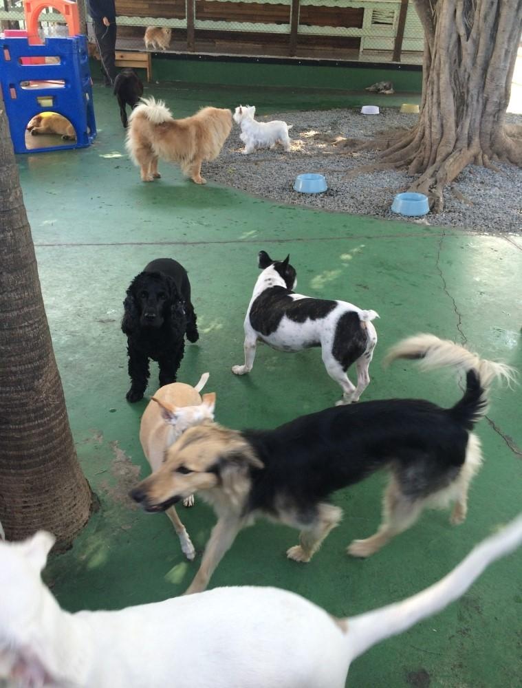 Pet Spa Preço no Parque do Carmo - Serviços de Spa Canino