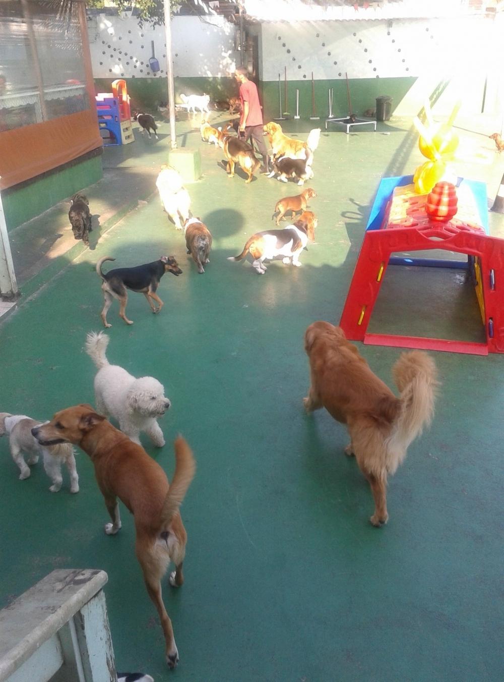 Pets Spa Macedo - Serviços de Spa Canino