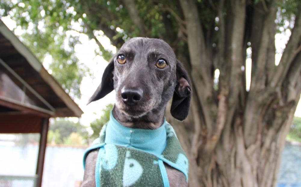 Quanto Custa Creche de Pets Itapegica - Creche Canina