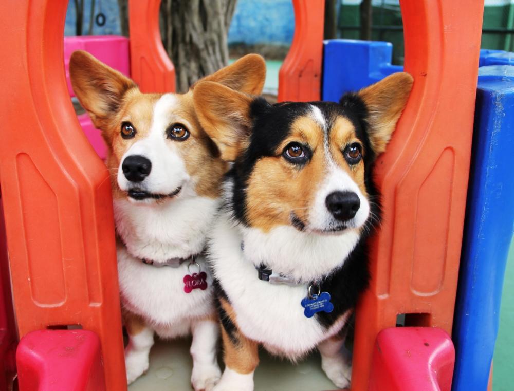 Quanto Custa Creche para Cachorro em São Paulo no Jockey Club - Creche de Pets