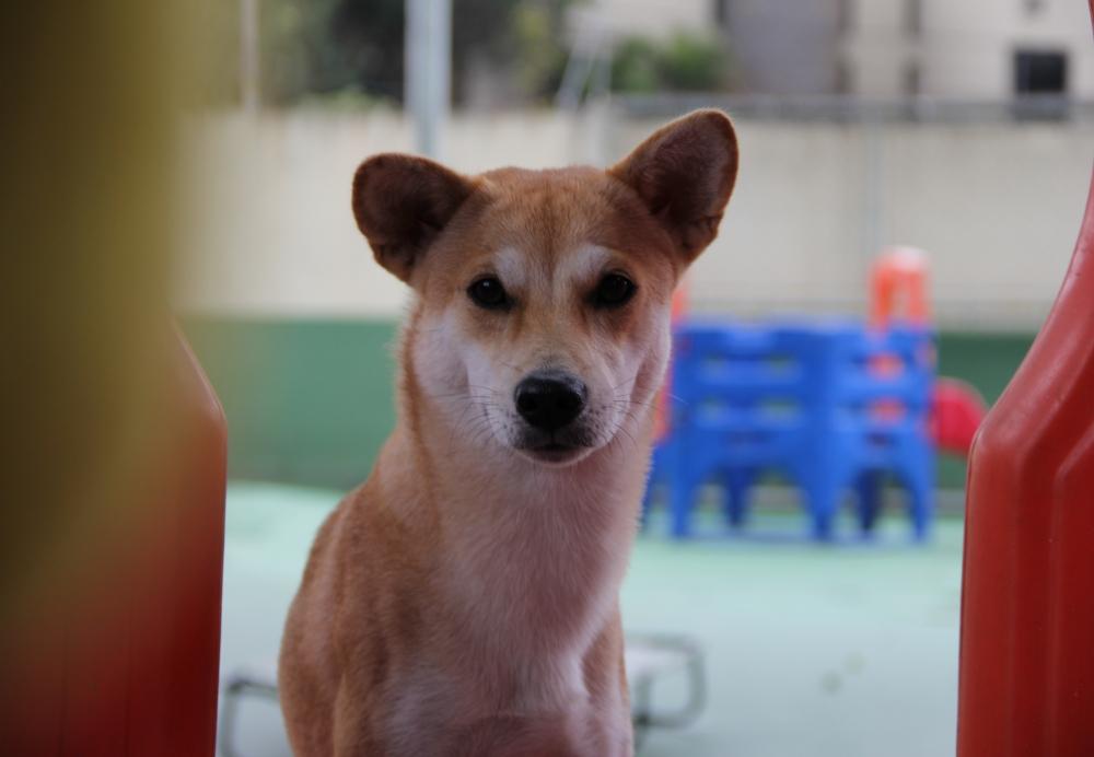 Quanto Custa Creche para Cachorro no Jardim São Luiz - Creche Canina