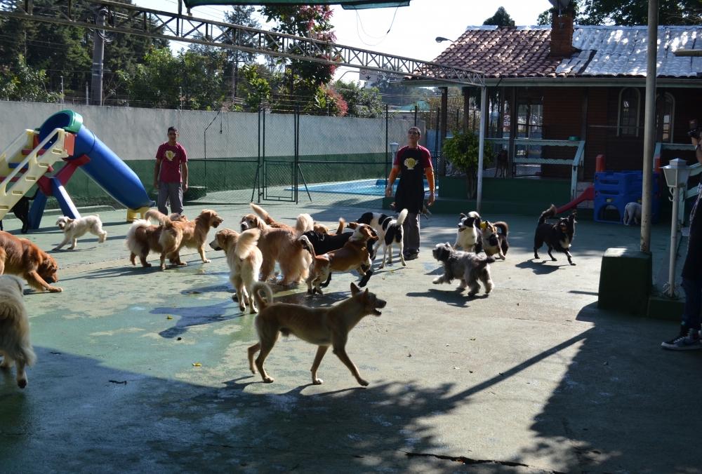 Quanto Custa Creche para Cães no Itaim Bibi - Creche de Cachorro