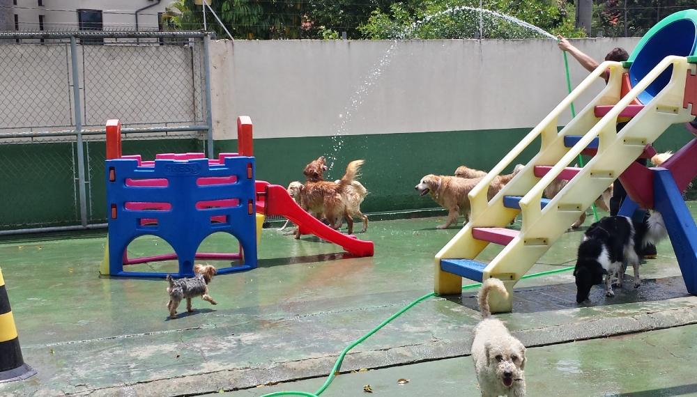 Quanto Custa Hotéis para Cachorro no Butantã - Hotéis para Cachorro