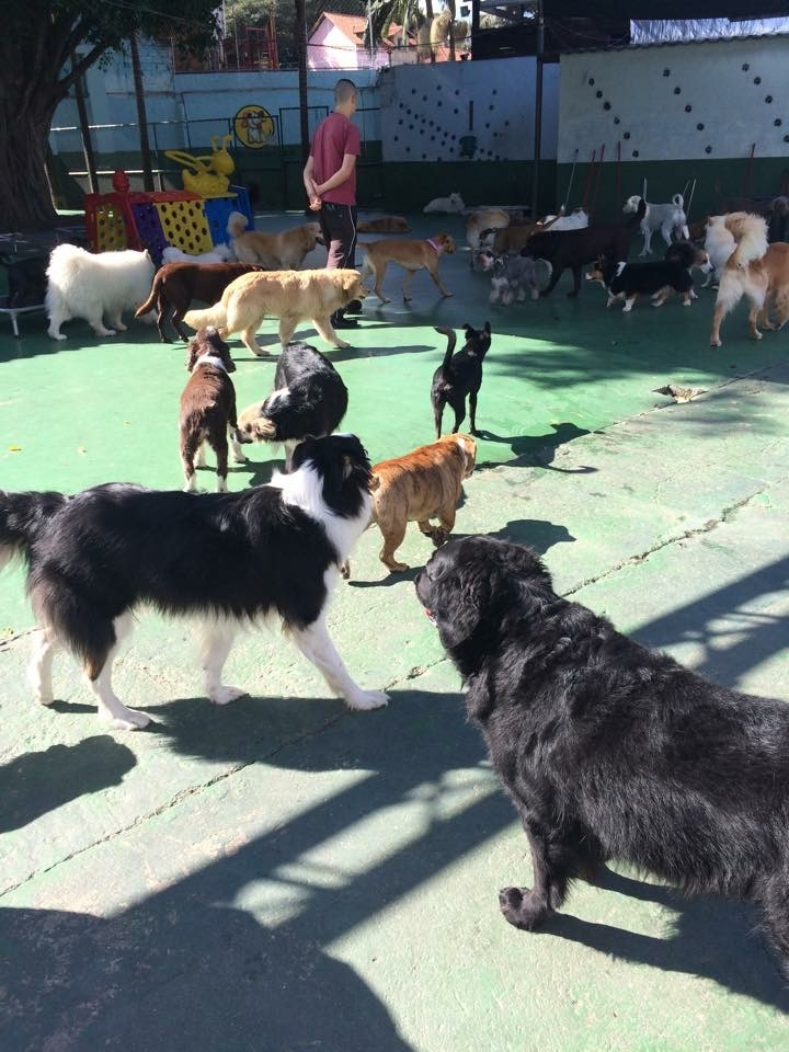 Quanto Custa Hotel de Cachorro em Higienópolis - Hotel para Cachorro Diária