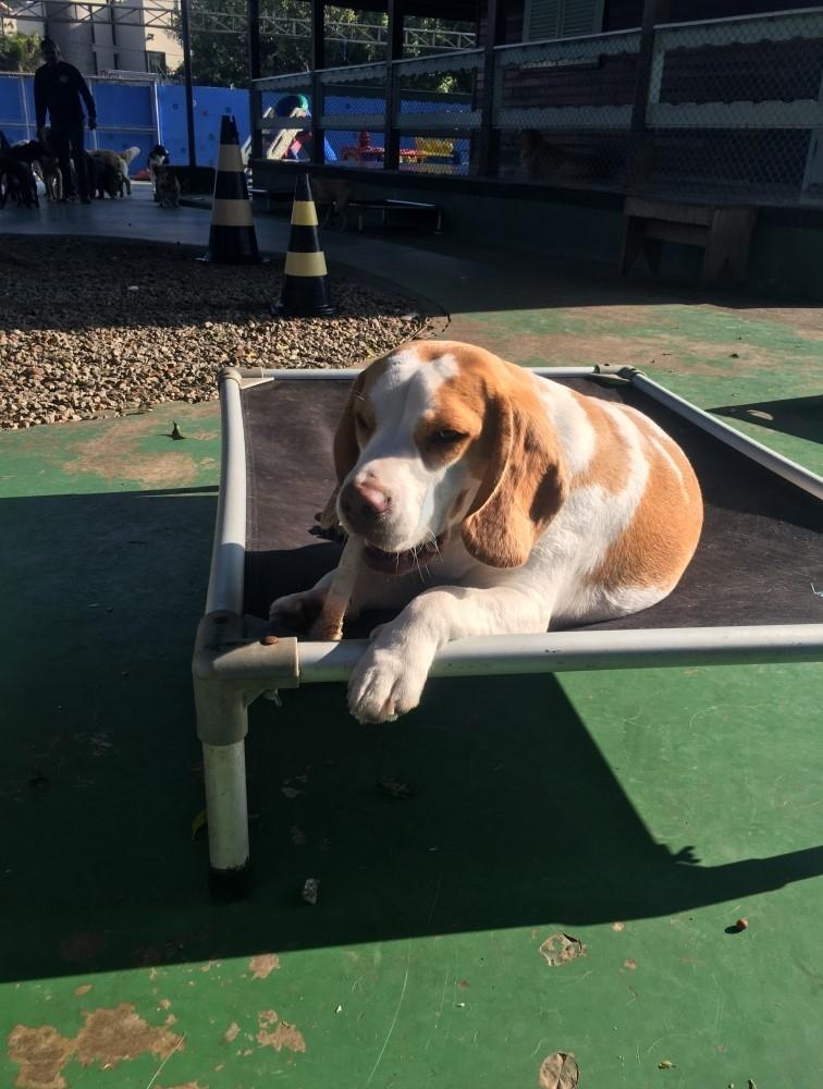 Quanto Custa Hotel para Cachorro Diária na Penha - Hospedagem de Cachorro