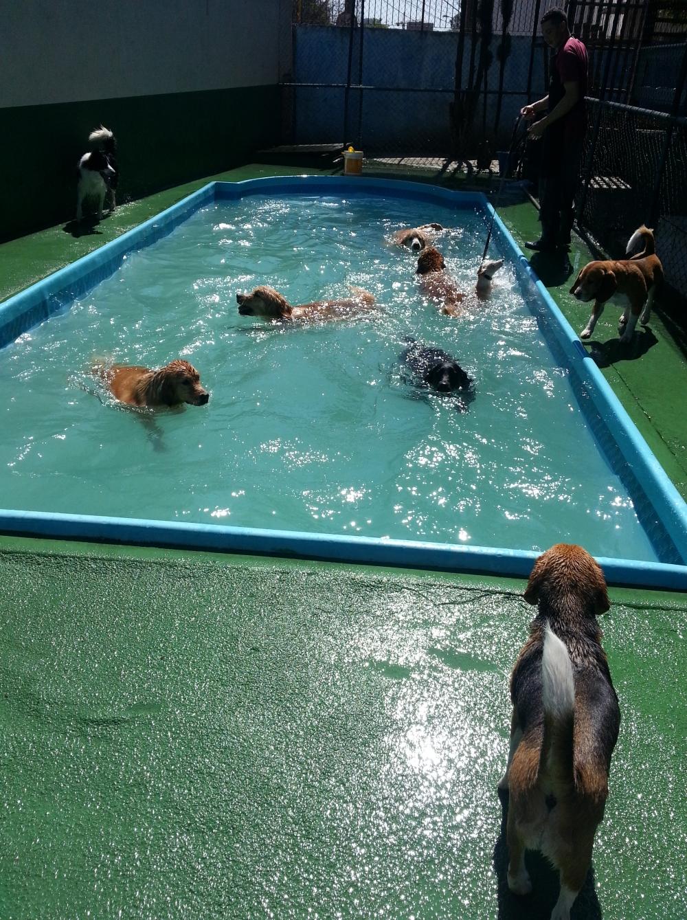 Quanto Custa Hotel para Cachorro em Sp na Vila Guilherme - Hospedagem de Cachorro