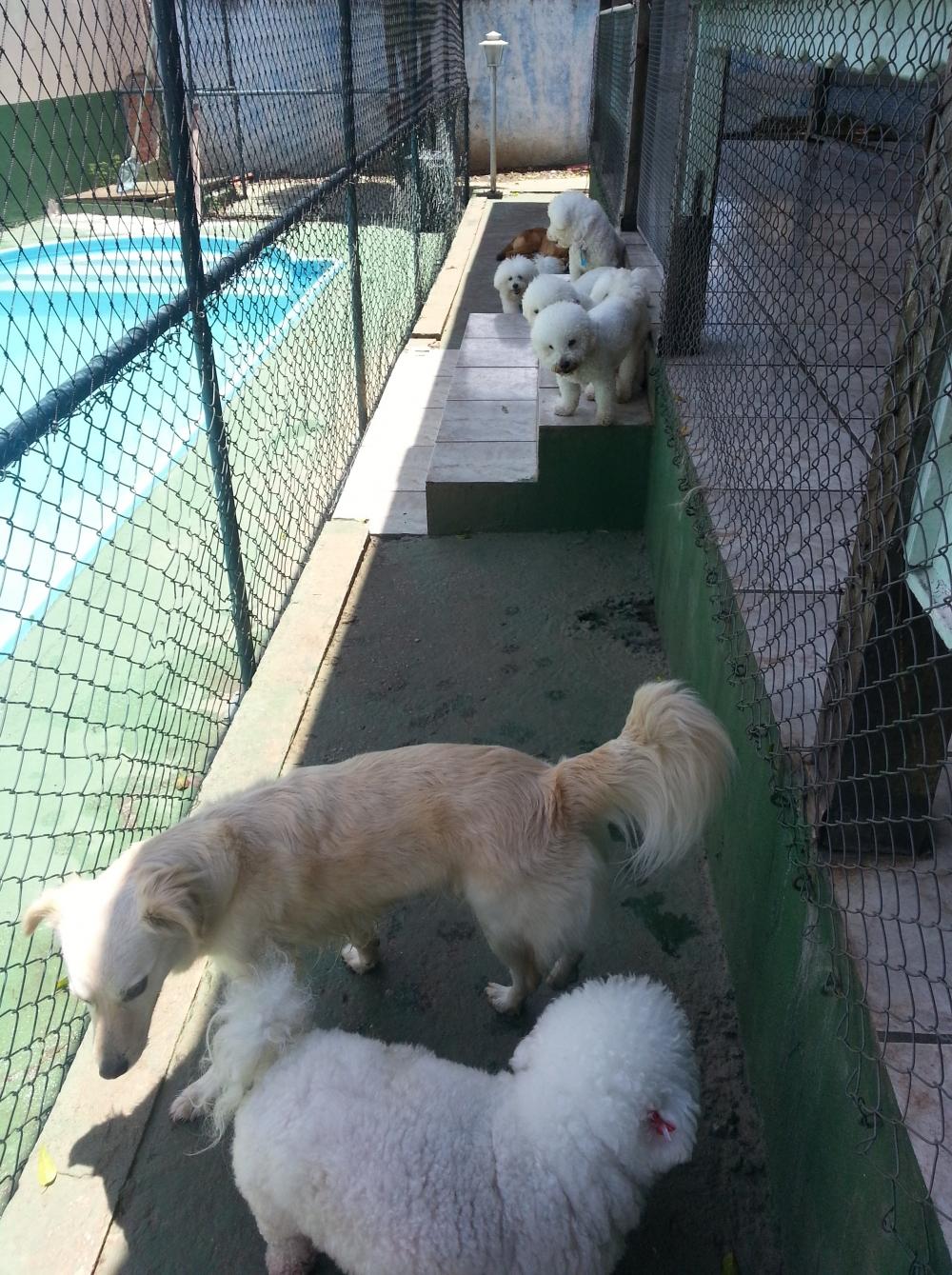 Quanto Custa Hotel para Cachorro no Brooklin na Vila Formosa - Hotel para Cachorro no Brooklin