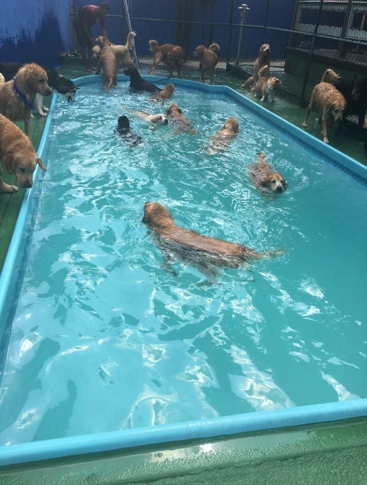Quanto Custa Hotel para Cachorro na Pedreira - Hospedagem de Cachorro