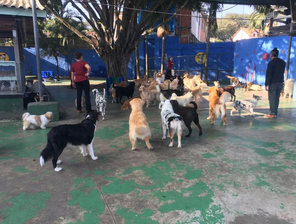 Quanto Custa Hotel para Pet na Bela Vista - Hotel de Cachorro