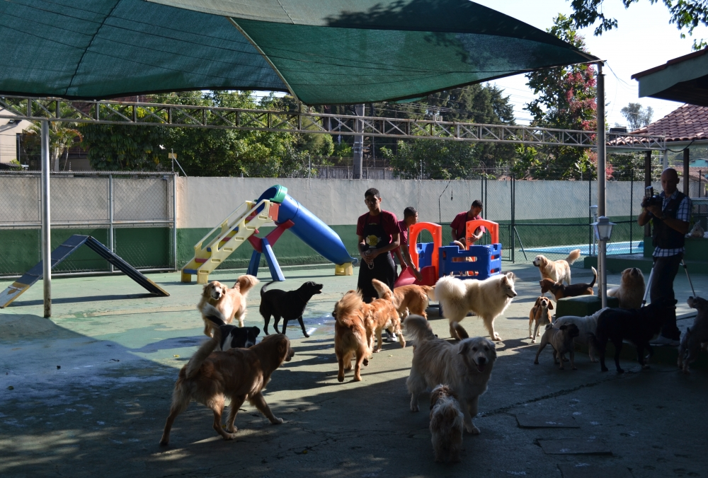 Quanto Custa Hotel Pra Cachorro na República - Serviços de Hotel para Cachorro
