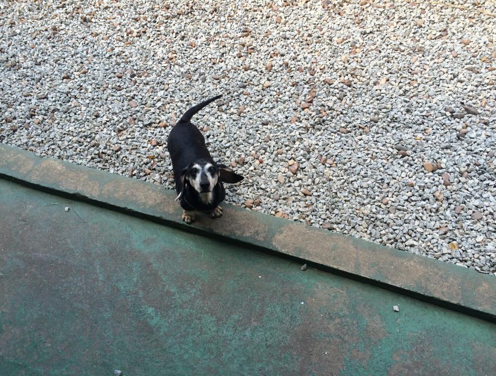 Quanto Custa Spa Canino em São Domingos - Pet Spa