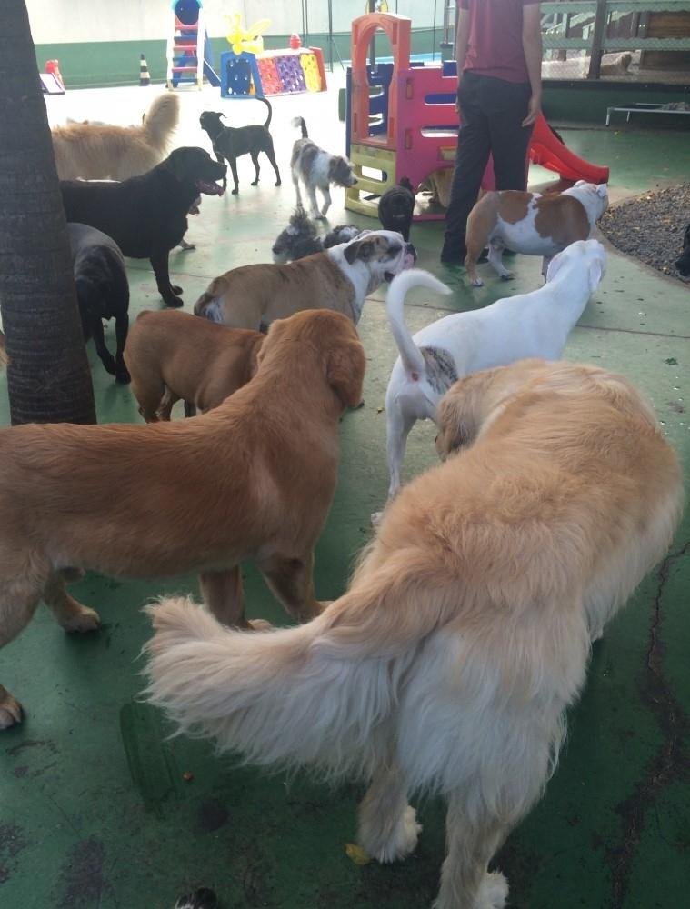 Quanto Custa Spa com Day Care Canino no Jardim Iguatemi - Serviços de Spa Canino