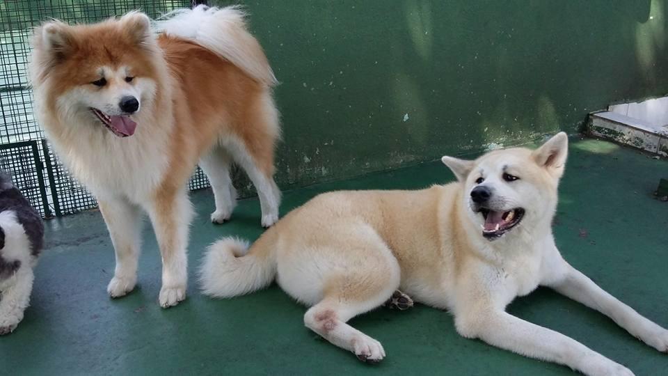 Quanto Custa Spa Especializado em Cães no Mandaqui - Spa para Cachorros