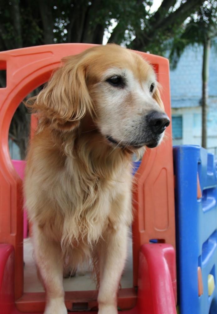Serviço de Creche para Cachorro no Jardim Bonfiglioli - Creche para Cães