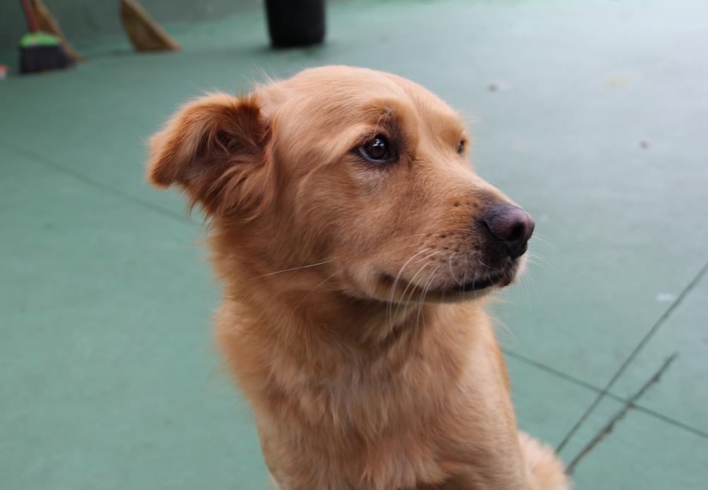 Serviços de Creche para Cachorro Preço no Jardim São Luiz - Creche para Animais