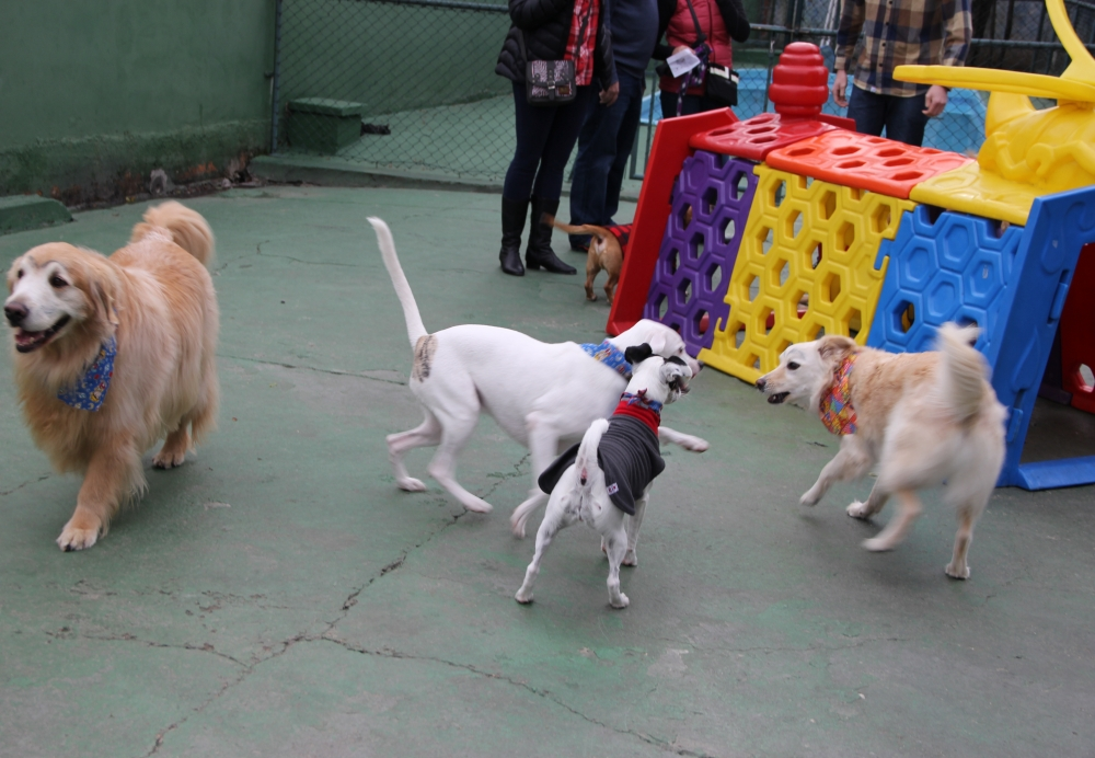 Serviços de Hotel para Cachorro Preço no Brooklin - Hotel para Cachorro em Sp