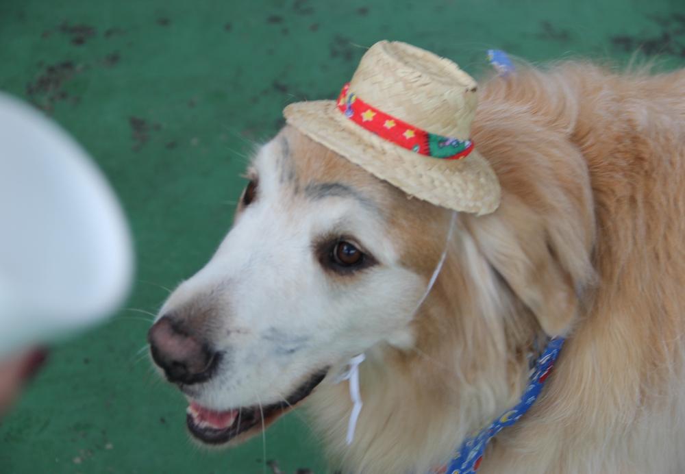 Serviços de Hotel para Cachorro na Vila Guilherme - Hotel para Cachorro