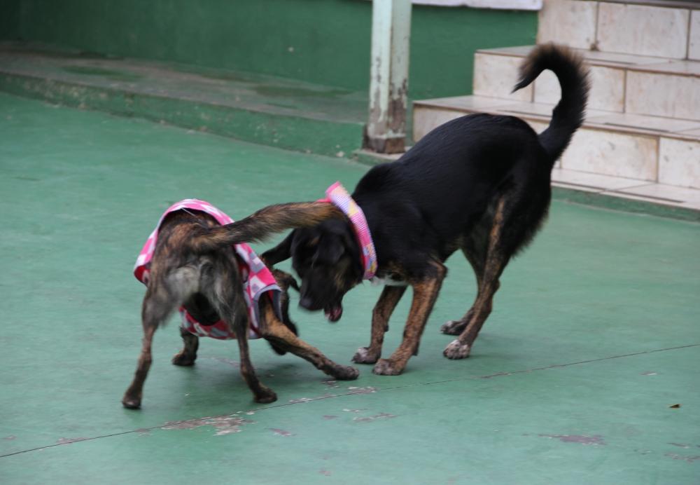 Serviços de Hotel para Cachorros no Jardim Paulista - Hotel para Cachorro Diária