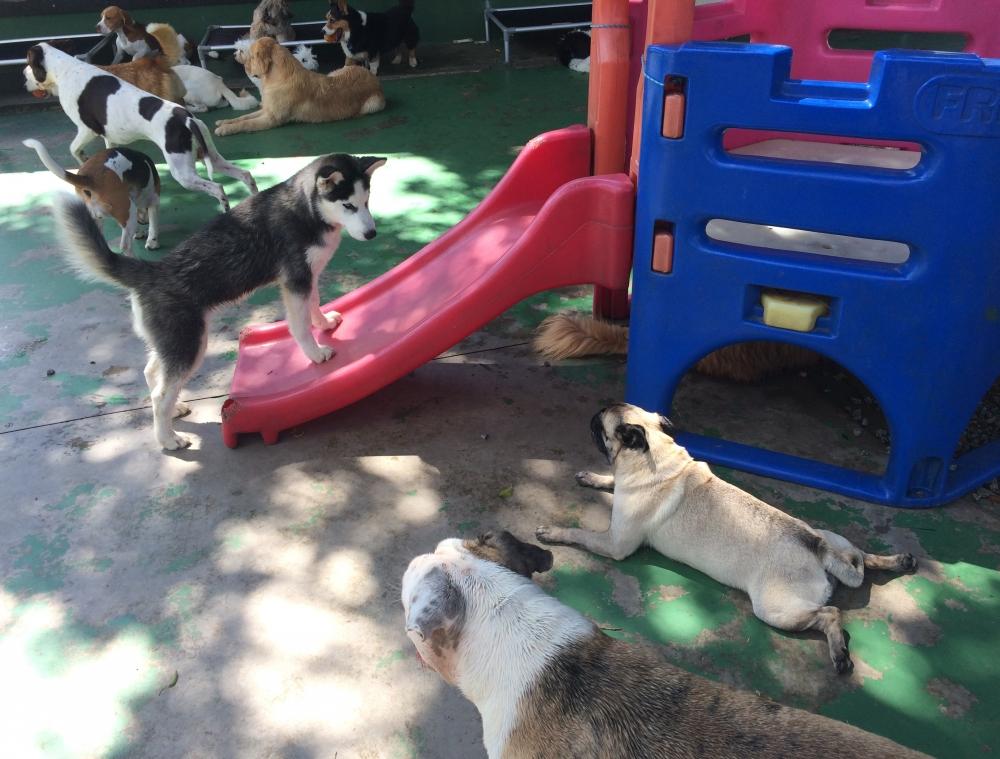 Spa Canino em Santana - Serviços de Spa Canino