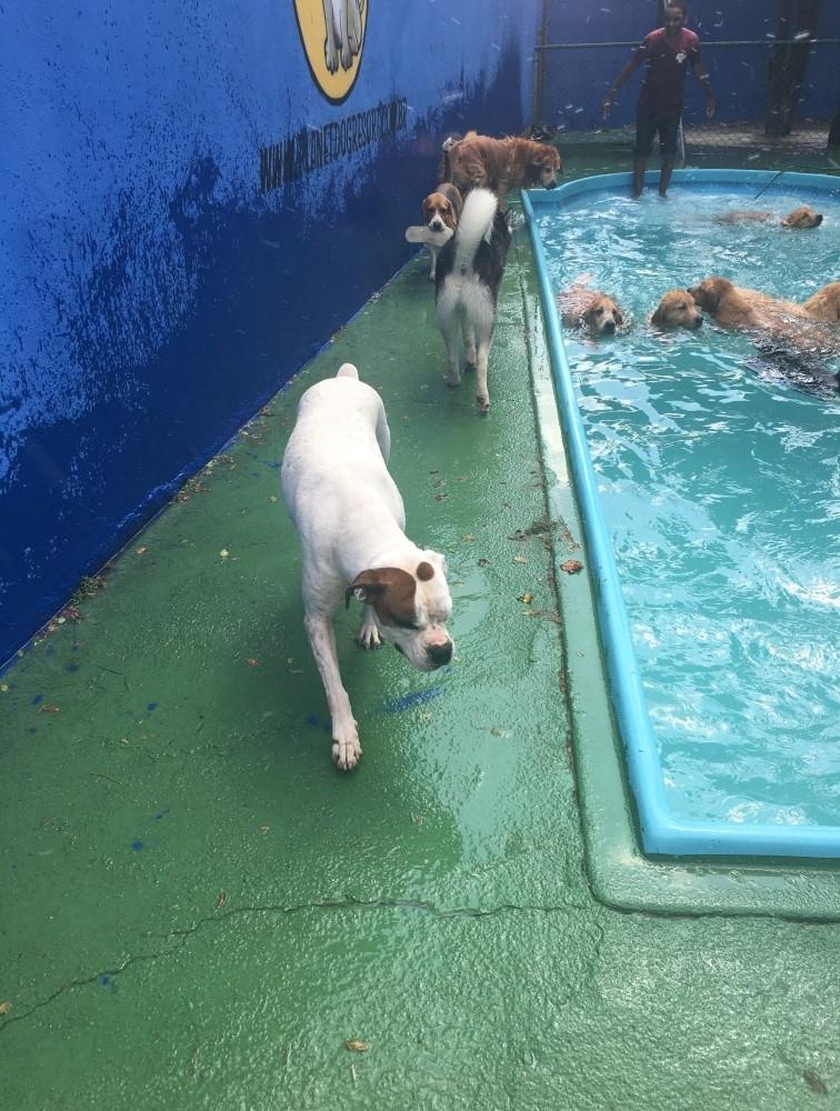 Spa de Cachorros Jardim Fortaleza - Spa de Cachorro