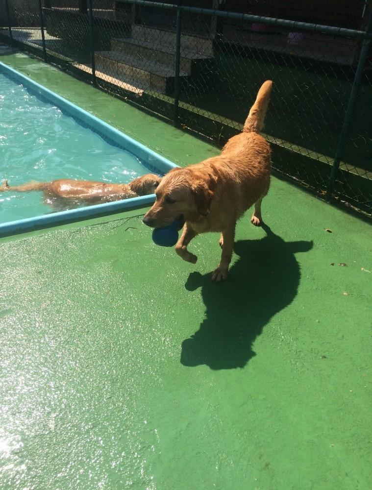 Spa para Animais na Cidade Patriarca - Spa para Cachorros