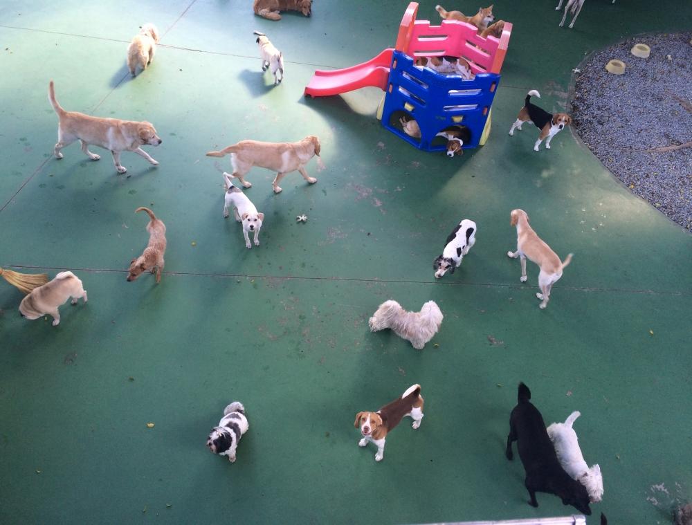 Spa para Cães em São Paulo no Pacaembu - Pet Spa