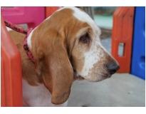 clube hotel para cães preço no Mandaqui