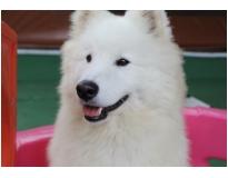 clube hotel para cães no Sacomã