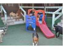 creche canina preço na Cidade Patriarca