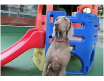 creche com day care para cachorro preço em Interlagos